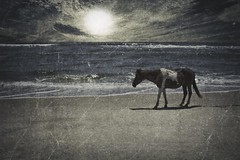 Raised in the Sun (delmarvajim) Tags: digitalart digitalprocessing digitaleffects texture drama beach horse surf waves clouds seascape ocean water