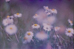 (von8itchfisk) Tags: olympus om10 colour fuda film filmisnotdead 35mm analog analogphotography ishootfilm expiredfilm flower flowerporn flowercandy nature vonbitchfisk