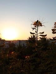 Before Sunset (20) (Polis Poliviou) Tags: nicosia lefkosia street summer capital life live polispoliviou polis poliviou πολυσ πολυβιου cyprus cyprustheallyearroundisland cyprusinyourheart yearroundisland zypern republicofcyprus κύπροσ cipro кипър chypre chipir chipre кіпр kipras ciprus cypr кипар cypern kypr ©polispoliviou2018 streetphotos europe building streetphotography urbanphotography urban heritage people mediterranean roads afternoon architecture buildings 2018 city town travel naturephotography naturephotos urbanphotos neighborhood