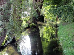 an der urtel (lualba) Tags: urtel bach brook grafing bavaria bayern water wasser weide willow green grün