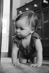 Granddaughter B&W (Gene Ellison) Tags: baby crawling carpet cabinet