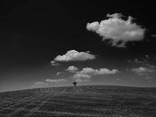 Lonely tree,