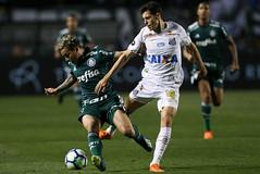 Santos x Palmeiras (19/07/2018) (sepalmeiras) Tags: artur pacaembu palmeiras sep santos sériea campeonatobrasileiro