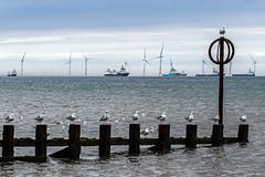 Musical Chairs for Seagulls - Aberdeen (Craig Hannah) Tags: seagull aberdeen groin seaside nature wildlife birds ship vessel boat windturbines northsea scotland aberdeenshire musicalchairs post june 2018 spring craighannah sea sky water