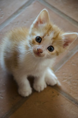 cat in light (walter.fangio) Tags: cats gatti gattini cuccioli baby animals animali incasa