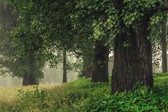 Green (Netsrak) Tags: baum bäume dunst europa europe landschaft meindorf natur nebel sieg fog haze landscape mist