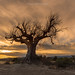 No hay árbol que el viento no haya sacudido