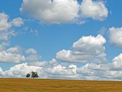 Look at the sky (Tobi_2008) Tags: himmel sky wolken clouds bäume trees landschaft landscape natur nature sachsen saxony deutschland germania germany allemagne