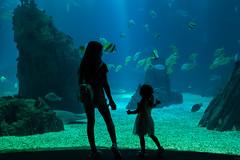 Do fish piss in the sea ? (.sl.) Tags: animaux lisbonne portugal aquarium fish lisbon portugo ocean kid oceanio people aquatic aquatique water underwater