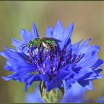 No More Green Bees thumbnail