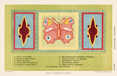 A chromolithograph of a botanical carpet bedding with a colorful butterfly by Federick William Burbridge (1847-1905). Digitally enhanced from our own original plate. (Free Public Domain Illustrations by rawpixel) Tags: tags ancient antique art bedding botanical burbridge butterfly carpet cc0 chromolithograph color colored colorful deco decor decoration drawing federick federickwilliamburbridge floral flower fresh gardening growing home horticulture illustration insect lithograph nature old painting plants plate print publicdomain retro severyns vintage