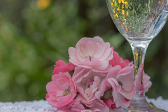 Enjoying the afternoon (Ok - you convinced me to stay) Tags: bokeh summer peace relax pink reflection water roses glass 7dwf flora roseisarose smileonsaturday