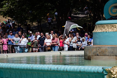 Opening of the Ross Fountain -77 (Philip Gillespie) Tags: edinburgh edinphoto scotland fountain gardens princes street tourist old water wet splash canon 5dsr men man women woman kids children boys girls swimming paddle blue turquoise gold yellow orange red green tree bush leaves flowers people crowd acts performers hoops ladies gents costumes umbrella drips sky clouds birds seagull pigeon magpie avian glare drip dog legs hands feet heads faces hair castle park nature outdoor outside