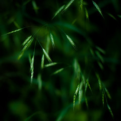 Forest Grass 022 (noahbw) Tags: captaindanielwrightwoods d5000 dof nikon abstract blur depthoffield forest grass light natural noahbw quiet shadow spring square still stillness woods