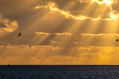 Heron Island Sunrise-10 (Quick Shot Photos) Tags: canon canoncollective heronisland queensland underwater snorkel bogie australia au