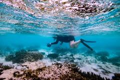 Marcia Snorkeling With Camera (Quick Shot Photos) Tags: canon canoncollective heronisland queensland underwater snorkel bogie australia au