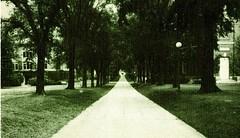 Broad Walk of Elms, Looking North, postmarked 1938 (The Urbana Free Library Digital Collections) Tags: universityofillinoisaturbanachampaign champaignil urbanail studentorganizations students studenthousing illinois