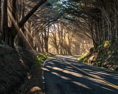 Mendocino Sunshine through the Trees (runcolt12) Tags: california californiacoast sunshine sunlight sanfrancisco mendocino pacificcoasthighway pacificocean trees fortbragg shadows nikon d800e