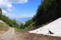 Nasco à Ovronnaz (bulbocode909) Tags: valais suisse ovronnaz chiens nature montagnes névés neige printemps paysages nuages forêts arbres chemins vert bleu groupenuagesetciel