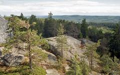 National Park Koli - Finland (Sami Niemeläinen (instagram: santtujns)) Tags: koli suomi finland lieksa pielinen metsä forest luonto nature kansallispuisto national park 35mm film kinofilmi lomography minolta kodad analog photography