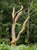 Around St Marthas-E6300219 (tony.rummery) Tags: em10 guildford lichen mft microfourthirds omd olympus shapes stmarthas stump surreyhills tree chilworth england unitedkingdom gb