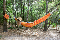 the life (catklein) Tags: camping hammock zen sleep forest