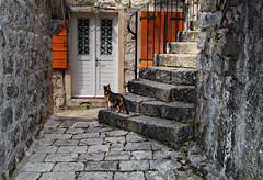 Curiosity (Jocelyn777) Tags: houses street alley corner stones stonehouses walls steps doors cat historictowns towns villages kotor montenegro balkans travel stairs