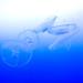 Moon Jelly (Aurelia aurita) of Enoshima Aquarium, Fujisawa : ミズクラゲ(藤沢市・新江ノ島水族館)