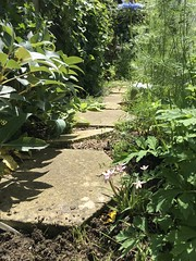 Side Path (basswulf) Tags: path sidepath ipadpro unmodified 43 image:ratio=43 permissions:licence=c plantdb:family=pending 20180603 201806 4032x3024 garden backgarden normcres oxford england uk notbyme byjane
