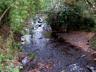 El río Blanco (Pirrís) en su curso alto/ The Blanco (Pirrís) river on its higher parts