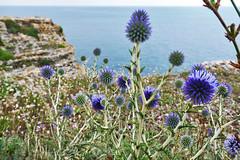 Bulgarian Black Sea coast (yuliyadraganova) Tags: sea bulgaria landscape seascape seaside nature europe travel photography beach roadtrip flowers