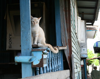 cat on a porch