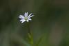 Flower macro (steffos1986) Tags: flower macro bokeh wild garden makro tamron90mm28macro nikond5500 color explore expression exposure