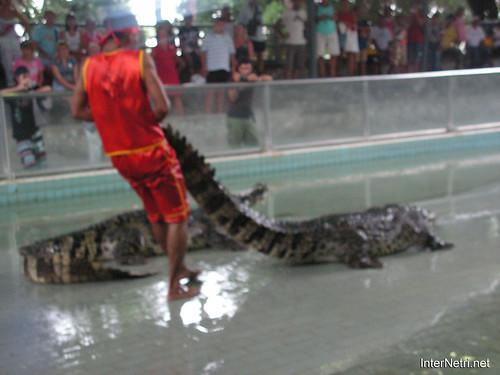 В пащу крокодилу Паттайя Таїланд Thailand InterNetri 37
