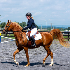 Square (HelwigPhotos) Tags: horse riding jump jumping woman happy sunny sports equestrian fence chestnut arabian tree pennsylvania barrel show champion action trailer travel shiny clean wash