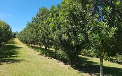 475 Pearces Creek Road, Alstonville NSW