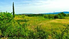 Toskana 1 (Chridage) Tags: toskana tuscany landschaft siena italien italy zypresse tuszien