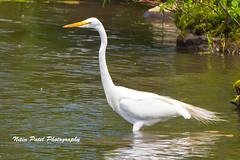 IMG_8638 (nitinpatel2) Tags: bird nature nitinpatel