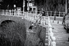 Hanging On A Bridge (Alfred Grupstra) Tags: blackandwhite fence outdoors people bridgemanmadestructure tree nopeople urbanscene bridge alkmaar nl nederland reed