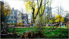 End of summertime ? (Visavis..) Tags: kyiv outofseason fujix100 trees urbanart 35mmequiv