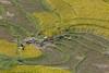_Y2U0465.0917.Lao Chải.Sapa.Lào Cai (hoanglongphoto) Tags: asia asian vietnam northvietnam northwestvietnam landscape scenery vietnamlandscape vietnamscenery vietnamscene terraces terracedfields terracedfieldsinvietnam valley muonghoavalley harvest canon làocai sapa thunglũngmườnghoa phongcảnh ruộngbậcthang lúachín mùagặt sapamùalúachín sapamùagặt laochải landscapewithpeople phongcảnhcóngười canoneos1dx canonef500mmf4lisiiusm