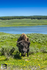 Yellowstone 2018-1 (Bryan Still) Tags: b c d e f g h j k l m n o p q r s t u v w x y z 1 2 3 4 5 6 7 8 9 me you us crazy pictures culture hdr hdri lighting fog night sky late boat planes flowers sun moon stars air nature trees clouds mountains artistic painting light sony a6000
