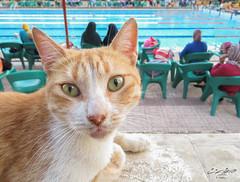 عاوز إيه ؟ (Tarek Ezzat) Tags: قط شارع حيوان نادي هليوليدو مصر الجديدة القاهرة cat heliolido street club