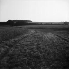 Crane Hill (tomwatson1987) Tags: lubitel ilford delta fields summer lubitel2