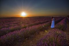Campos de Lavanda / Fields of Lavender (por agustinruizmorilla) Tags: sun sets lavanda fields