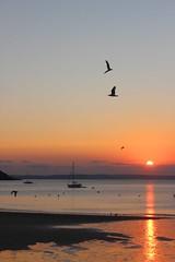 Seagulls yachts sunrise Gorran Haven Cornwall (L A Kent author of Cornish DI Treloar mysteries, w) Tags: cornwall gorran haven sunrise seagulls gulls yachts sea beach di treloar la l a kent murder mystery silent gull rogue flamingo broken dove