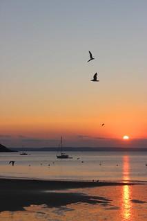 Seagulls yachts sunrise Gorran Haven Cornwall