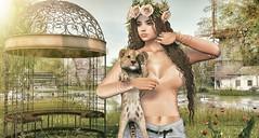 Sketches of Summer (Luane Meo) Tags: armoniadecor dubaievent addams blackbantam alme shinyshabby phoenix lode catwa maitreya larahurley ikon luanesworldbentoposes luanesworld