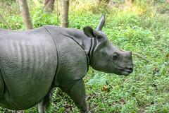 Indian rhinoceros (RunningRalph) Tags: chitwan indianrhinoceros nepal rhino rhinoceros centraldevelopmentregion np mammal