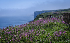 RSPB Bempton Cliffs (littlestschnauzer) Tags: rspb bempton cliffs view flowers wildflowers sea coast coastline
